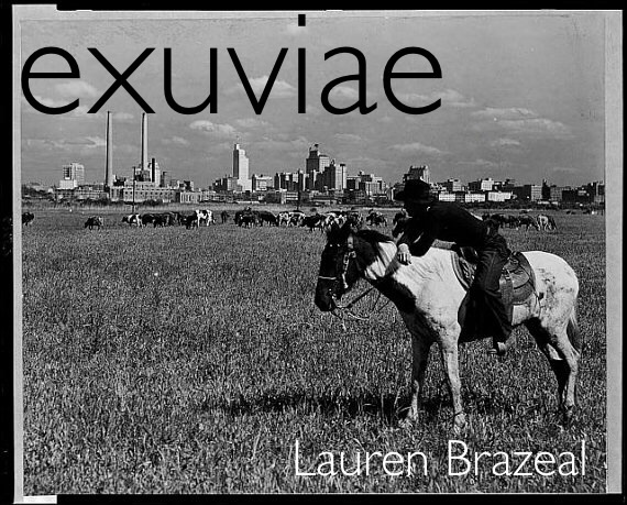 exuviae cover image